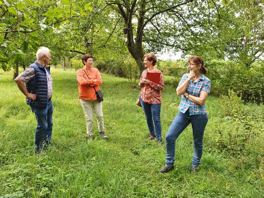 Der alte Baumbestand im Gewann Grübe bietet unzählige Nistmöglichkeiten für Vögel (André Siepe)