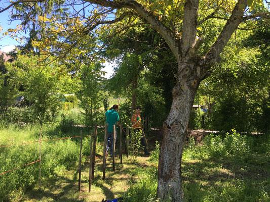 Hier sieht man die Pfosten, die das Totholz zusammenhalten werden (Dagmar Schülke)