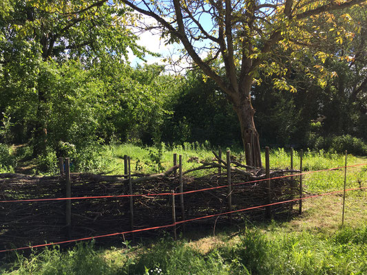 Struktur im naturnahen Garten (Dagmar Schülke)