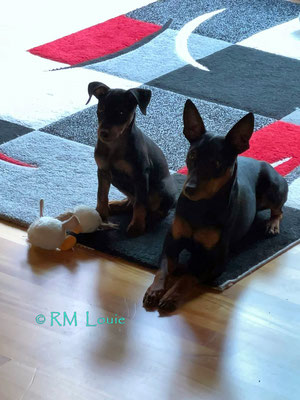 Louie *Luigi* & Karlos warten auf das Essen