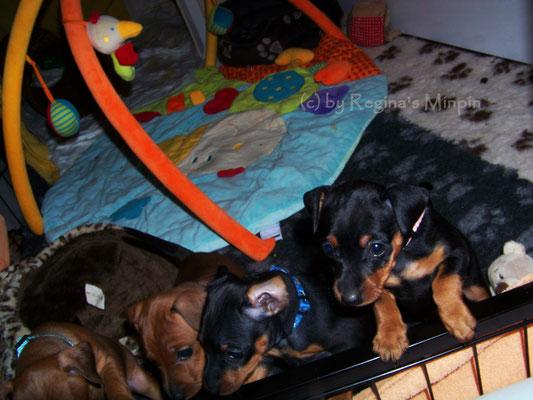 Die Kleinen wollen raus!