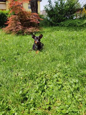 Luna genießt ihr Zuhause