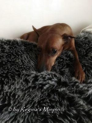 Aber auf Mamis Couch ist es noch bisserl schöner, dauert ja noch ein bisserl. :) Aber wir sind gerüstet!