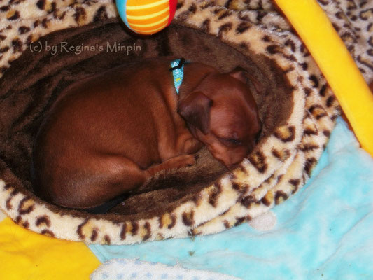 Infintiy Luna genießt den Schlafsack <3