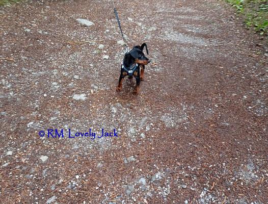 Jack's erster Waldspaziergang