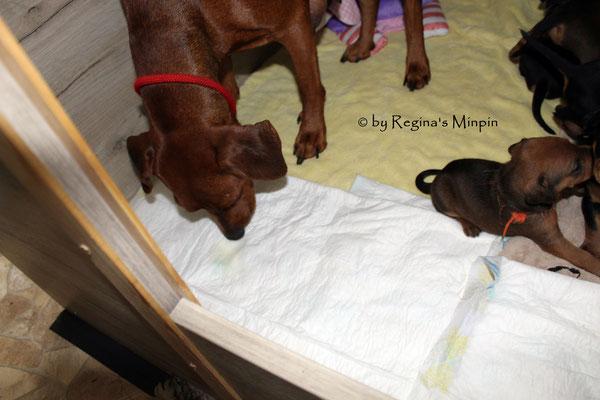 Mami kontrolliert den Pipi Bereich ob es sauber ist.