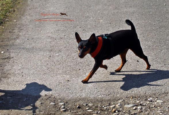 Imara genießt die Spaziergänge.