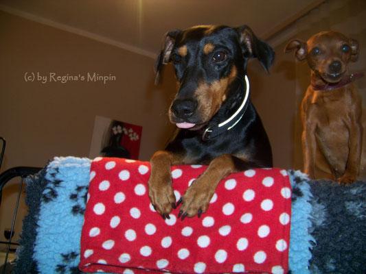 Zaungast Xcarlett & Gina sind schon sooooooooooooooooo neugierig und möchten zu den Kleinen. Mami sagt noch NEIN