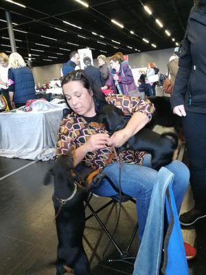 Ruhig Blut wir bereiten uns auf den Ring vor und vermitteln Ruhe für die Hunde.