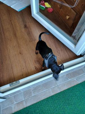 Jack inspiziert sein Zuhause