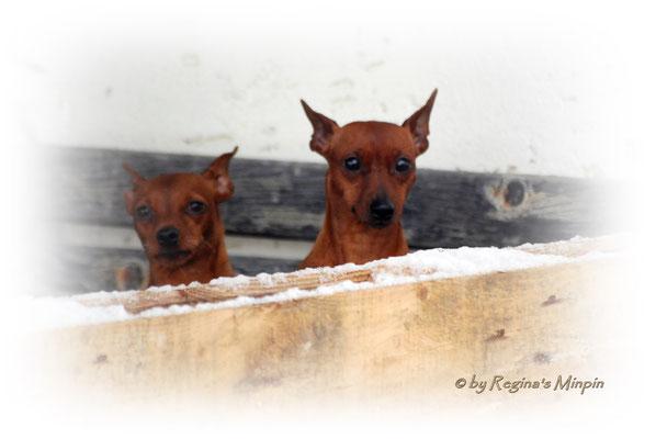 Es hat geschneit und die Mädels müssen mal als Zaungäste die Lage checken. ;)