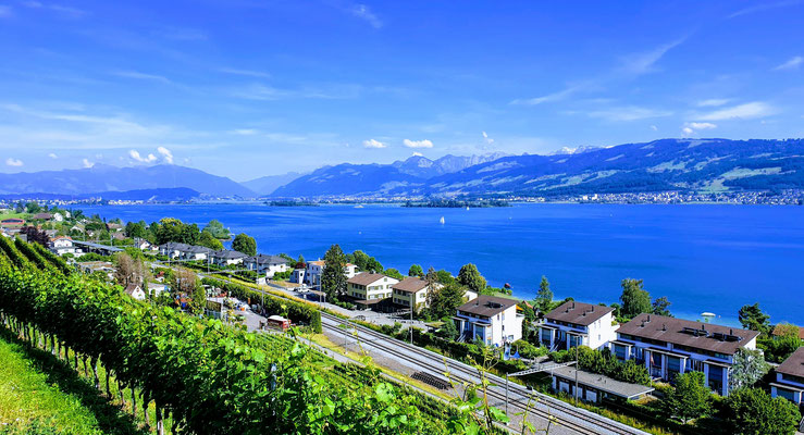Beautiful View over Lake of Zurich and Swiss Alps (100 m from Office Building)