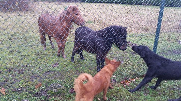 Mokusch,Heidi,Rosa und die Ponys