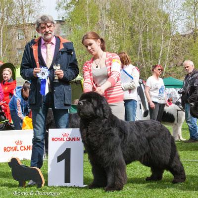 Aquatoriya Kelvin Flash Royal- победитель класса Чемпионов, КЧК!