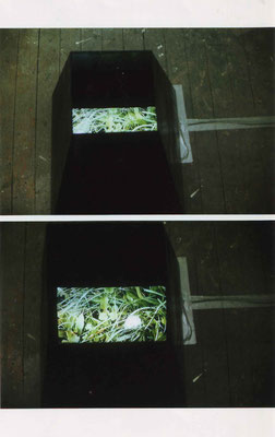 """Pusteblume"", Video Installation, Grenoble, 2000"
