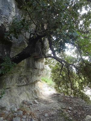 """""""Inoffizieller"""" Wanderweg entlang der Felswand"""