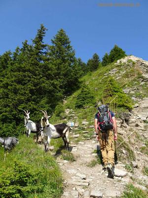 Alpinwanderweg auf das Morgenberghorn