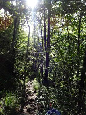 Abstieg durch Wald