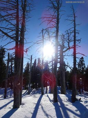 Grotesk aussehende Baumreste