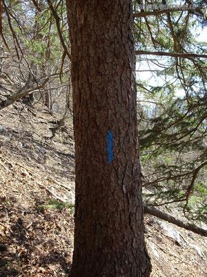 blaue Markierung - Trampelpfad vom kleinen Bärenloch