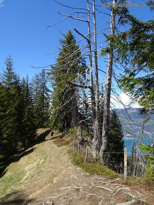 Abstieg von Brunni in Richtung Greberegg