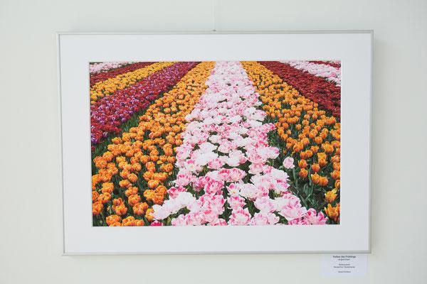 """Blütenpracht"" - Keukenhof, Niederlande"