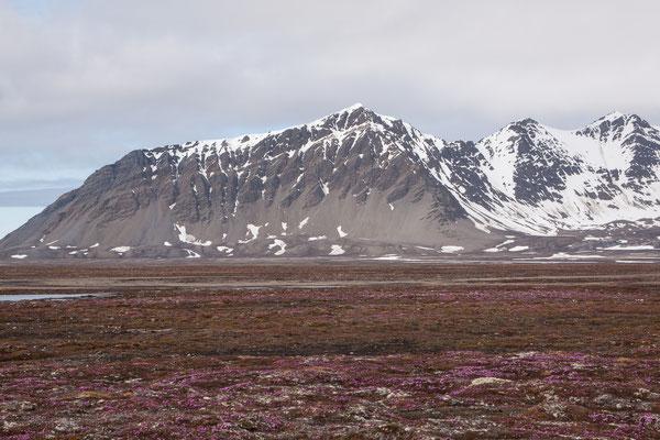 Tundra bei Poolepynten