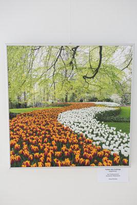 """""""Der Frühling kommt"""" - Keukenhof, Niederlande"""