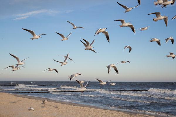 Am Strand von Köslinsee