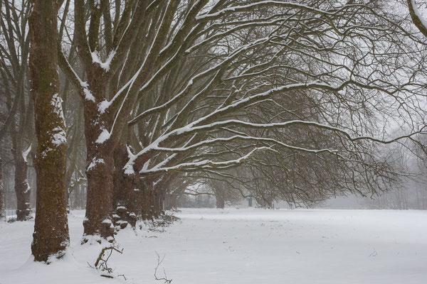 Decksteiner Weiher im Winter