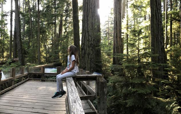 Der mystische Wald auf Vancouver Island