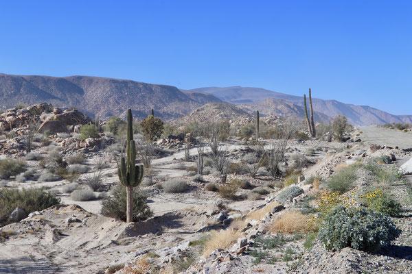 Cactus everywhere