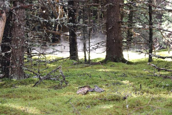 Moss Forest Floor