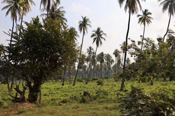 Roadside Vegetation