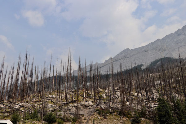 Überbleibsel eines Waldbrandes im Jahr 2015