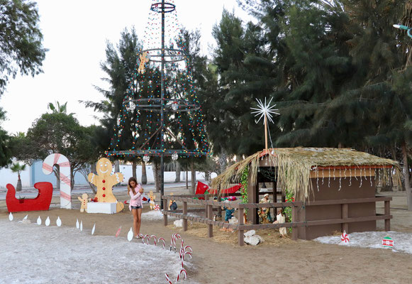 A little bit of Xmas in an far away dry and hardly populated Mid Baja California