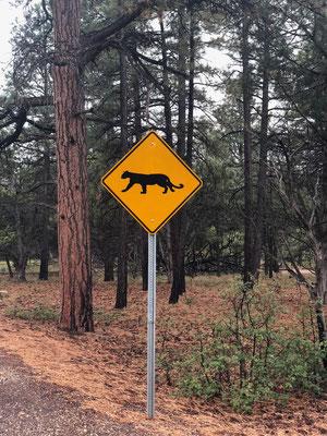 Careful Mountain Lions!!!