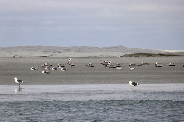Many birds stop here as they migrate south