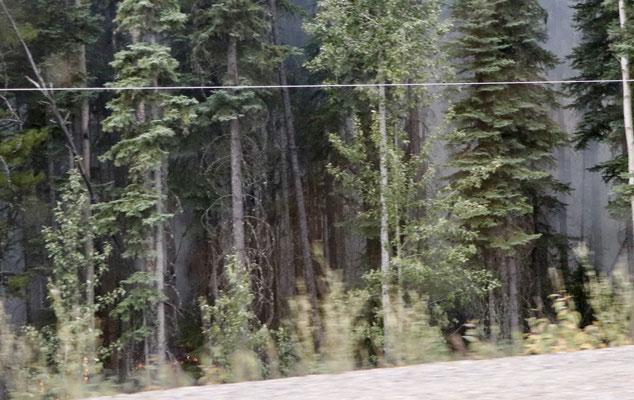 Wald Brand
