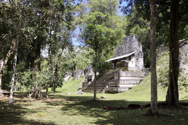 Tikal extends over an area of about 65 square kilometres, of which the central area covers about 16 square kilometres, with over three thousand buildings.