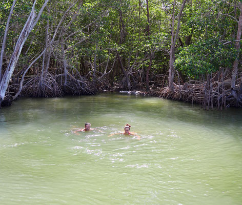 ...quite a strange experience swimming in the mangroves with water spouting out below your feet...