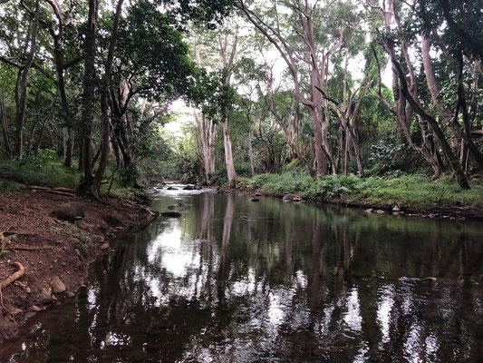 ...the mud path riverside...