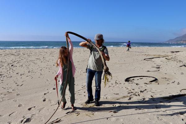 Eine 3m lange Meerespflanze