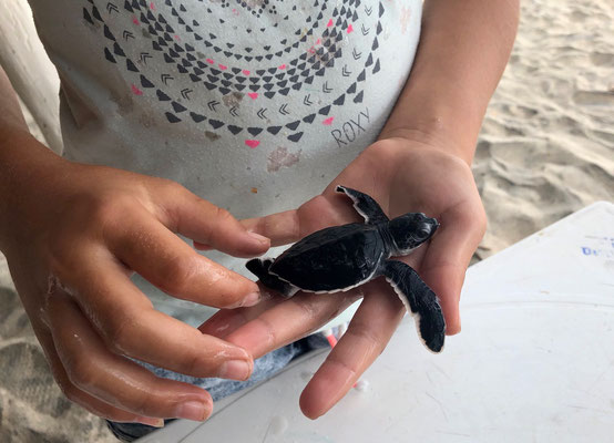 The lady serving us showed us her baby turtles, which had just hatched the night before