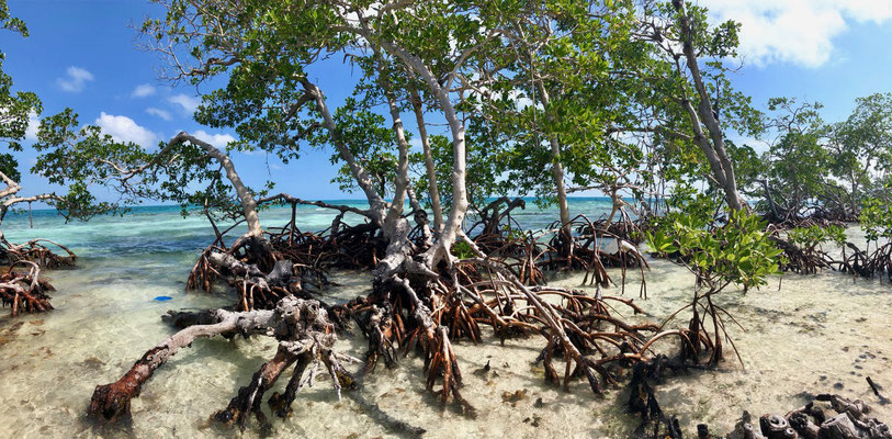 This mangroves hold the island together
