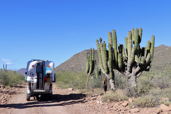 ..passing some giant Cactus..