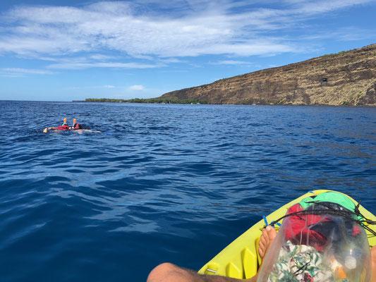 Snorkelling in Kealakekua Bay