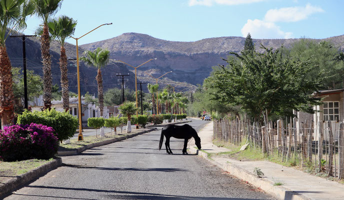 where the horses grassed in the streets