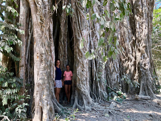 """On the way we discovered a giant ficus tree """"El Higueron"""""""