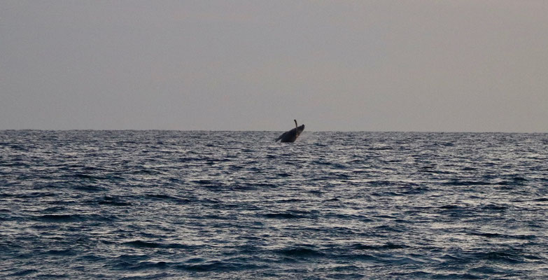..the whale jumped out of the water several times so we could capture this special moment